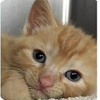Adopt A Pet :: Luigi - Springdale, AR