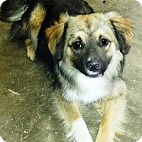 Adopt A Pet :: I'M ADOPTED Thandy Coakley - Oswego, IL