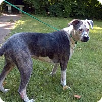 Terrier (Unknown Type, Medium) Mix Dog for adoption in Terre Haute, Indiana - COOKIE N CREAM