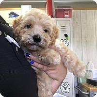 Adopt A Pet :: Curl - Waycross, GA