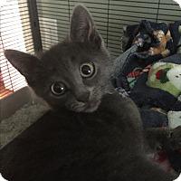 Adopt A Pet :: Ralphie - Maybrook, NY