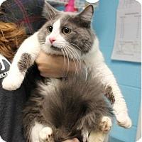 Adopt A Pet :: Tango - Fairfax, VA