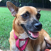 Adopt A Pet :: Juliet - CUMMING, GA
