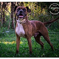 Adopt A Pet :: Ernest - Batavia, OH
