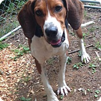 Adopt A Pet :: Travis - Sweetwater, TN
