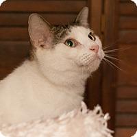 Adopt A Pet :: Nevaeh - Faribault, MN