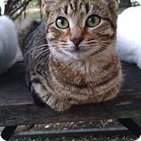 Adopt A Pet :: Jasmine - Fischer, TX