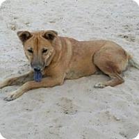 Adopt A Pet :: Rita - Danbury, CT