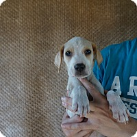 Adopt A Pet :: Kosmo - Oviedo, FL