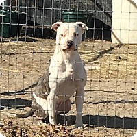 Adopt A Pet :: Thor - Mexia, TX
