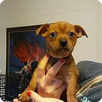 Adopt A Pet :: Jyn - Monroe, NC