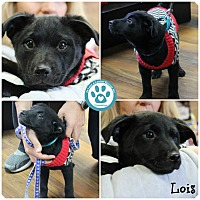 Adopt A Pet :: Lois - Kimberton, PA