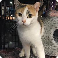 Adopt A Pet :: Kara - Georgetown, DE