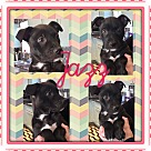 Adopt A Pet :: JAZZ