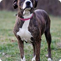Adopt A Pet :: Deanna - Waldorf, MD