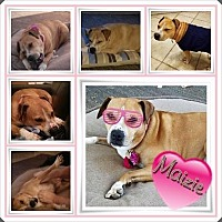 Adopt A Pet :: Maizie - Louisiana, MO