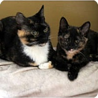 Adopt A Pet :: Polly & Princess - Xenia, OH