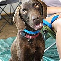 Adopt A Pet :: Ace - Cumming, GA