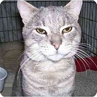Adopt A Pet :: GRAY (SC) - Little Falls, NJ