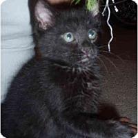 Adopt A Pet :: Pippin - Davis, CA