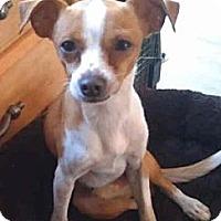 Adopt A Pet :: TATE - Phoenix, AZ