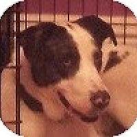 Adopt A Pet :: CJ - Hamilton, ON