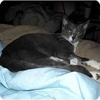 Adopt A Pet :: Ivana - Irvine, CA