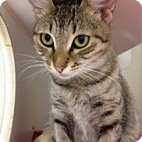 Adopt A Pet :: Cairo - Miami, FL