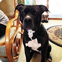 Adopt A Pet :: Mercedes - Kenosha, WI