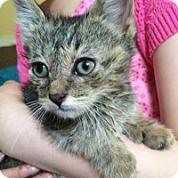 Adopt A Pet :: Ben - Riverhead, NY