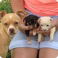 Adopt A Pet :: PAM - ROCKMART, GA
