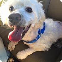 Adopt A Pet :: Stuart - San Francisco, CA