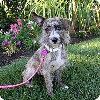 Adopt A Pet :: REESE - Newport Beach, CA