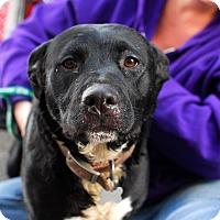 Adopt A Pet :: Vanna-Adopted! - Detroit, MI
