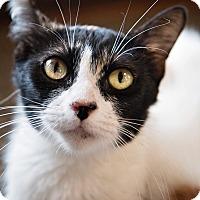 Adopt A Pet :: Caccini - Luling, LA