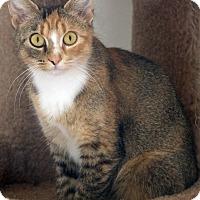 Adopt A Pet :: Osceola - St Louis, MO