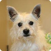 Adopt A Pet :: Brody - Wildomar, CA