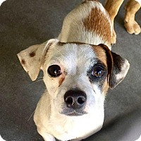 Adopt A Pet :: Charlotte - beverly hills, CA