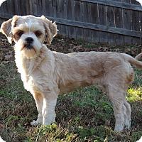 Adopt A Pet :: Paula - Joplin, MO