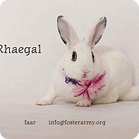 Adopt A Pet :: Rhaegal - Riverside, CA
