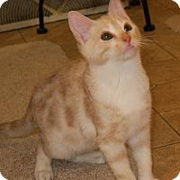 Adopt A Pet :: Blizzard - Bedford, VA
