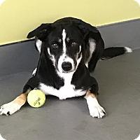 Adopt A Pet :: CLEMENTINE - San Pedro, CA