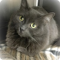 Adopt A Pet :: Gracie - Webster, MA