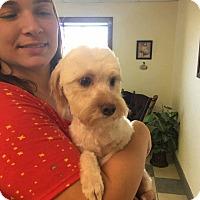 Adopt A Pet :: Truffles - Peyton, CO