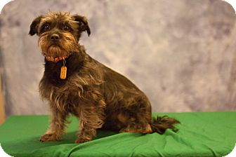 Terrier (Unknown Type, Small) Mix Dog for adoption in Sheridan, Oregon - Mona