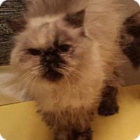 Adopt A Pet :: Paisley - Columbus, OH