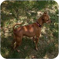 Adopt A Pet :: LIBBY - Springvale, ME