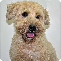 Adopt A Pet :: Hamlet - Port Washington, NY