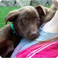 Adopt A Pet :: Jana - In CT! - Adamsville, TN