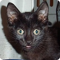 Adopt A Pet :: Cocoa - Porter, TX